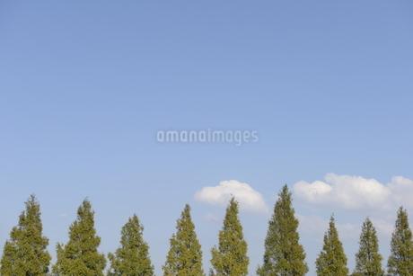 並木コピースペースの写真素材 [FYI01258424]