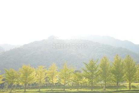 山と並木の写真素材 [FYI01258425]