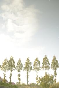 並木の水面反射のイラスト素材 [FYI01258426]