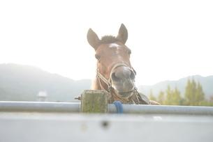 牧場の馬の写真素材 [FYI01258433]