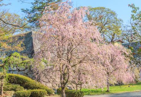 春の盛岡城の風景の写真素材 [FYI01258451]