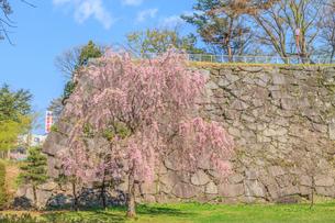 春の盛岡城の風景の写真素材 [FYI01258456]