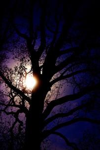 漆黒の木の写真素材 [FYI01258457]