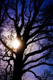 漆黒の木の写真素材 [FYI01258462]