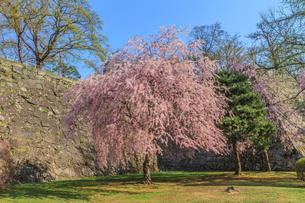 春の盛岡城の風景の写真素材 [FYI01258470]