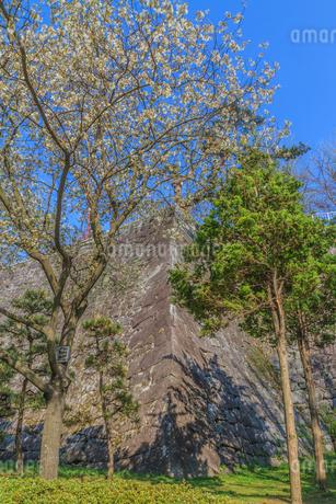 春の盛岡城の風景の写真素材 [FYI01258482]