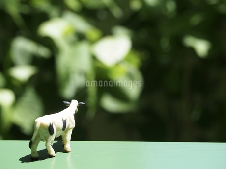 ミニチュアの牛の後ろ姿の写真素材 [FYI01258486]