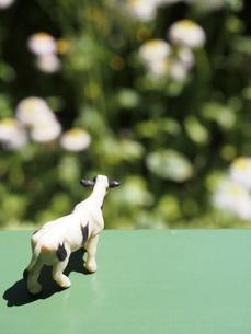 ミニチュアの牛の後ろ姿3の写真素材 [FYI01258490]