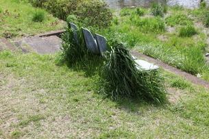 草に覆われたベンチの写真素材 [FYI01258507]
