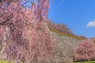 春の盛岡城の風景の写真素材 [FYI01258603]
