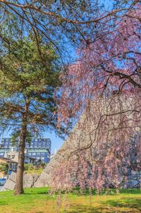 春の盛岡城の風景の写真素材 [FYI01258607]