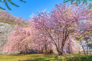 春の盛岡城の風景の写真素材 [FYI01258614]