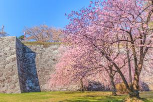 春の盛岡城の風景の写真素材 [FYI01258615]