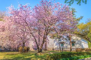 春の盛岡城の風景の写真素材 [FYI01258616]