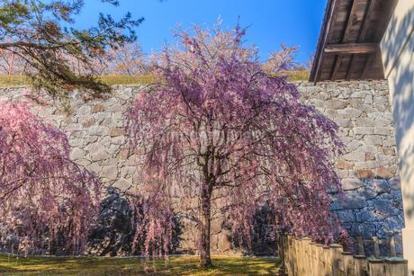 春の盛岡城の風景の写真素材 [FYI01258621]