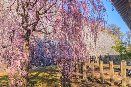 春の盛岡城の風景の写真素材 [FYI01258622]