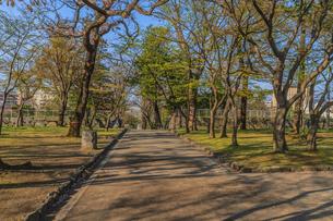春の盛岡城跡の風景の写真素材 [FYI01258696]
