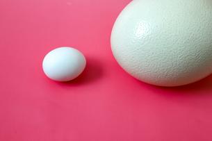 ニワトリとダチョウの卵の写真素材 [FYI01258723]