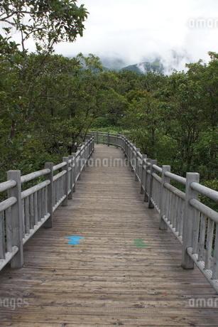 知床半島の自然歩道の風景の写真素材 [FYI01258793]