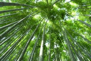竹林の写真素材 [FYI01258861]