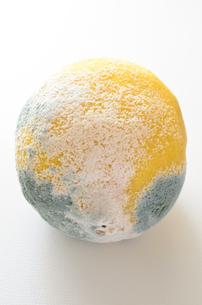 青カビ レモンの写真素材 [FYI01259066]