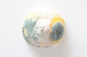 青カビ レモンの写真素材 [FYI01259068]