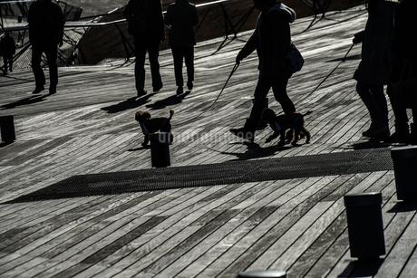 大さん橋のウッドデッキと人々のシルエットの写真素材 [FYI01259225]