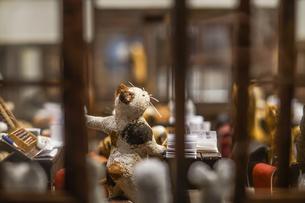 猫の学校の写真素材 [FYI01259233]
