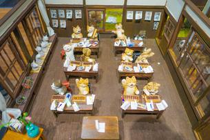 猫の学校の写真素材 [FYI01259237]