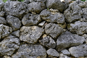 沖縄県,西表島,石垣の写真素材 [FYI01259325]
