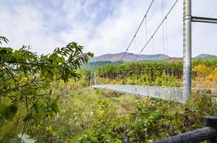 秋色の蔵王とやまびこ吊り橋付近の写真素材 [FYI01259347]