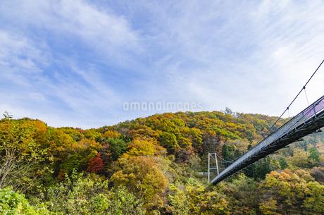 秋色の蔵王とやまびこ吊り橋付近の写真素材 [FYI01259349]
