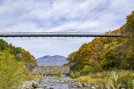 秋色の蔵王とやまびこ吊り橋付近の写真素材 [FYI01259350]
