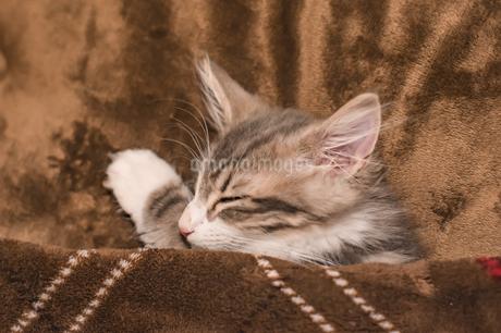 眠る子猫の写真素材 [FYI01259369]
