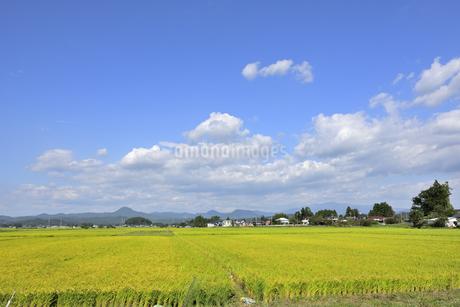 東北の稲作の写真素材 [FYI01259489]