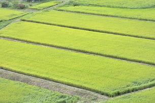 東北の稲作の写真素材 [FYI01259498]