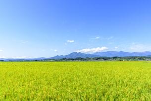 東北の稲作の写真素材 [FYI01259511]