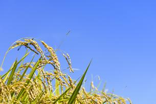 東北の稲作の写真素材 [FYI01259520]