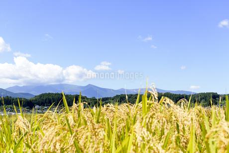 東北の稲作の写真素材 [FYI01259523]