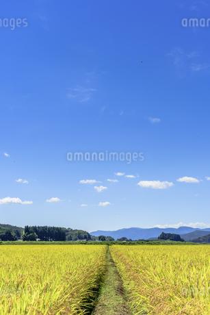 東北の稲作の写真素材 [FYI01259527]