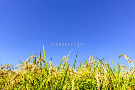 東北の稲作の写真素材 [FYI01259532]