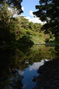 ジャングルの川に反射する木々の写真素材 [FYI01259590]