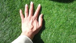 芝生に触れるの写真素材 [FYI01259654]