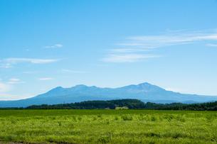 緑の牧草畑と夏山 大雪山の写真素材 [FYI01259695]