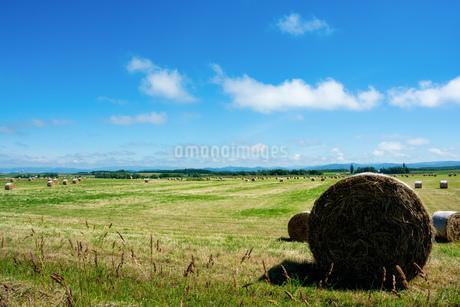 緑の牧草畑と牧草ロールの写真素材 [FYI01259710]