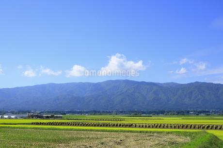 秋色の山形県白鷹町の写真素材 [FYI01259895]
