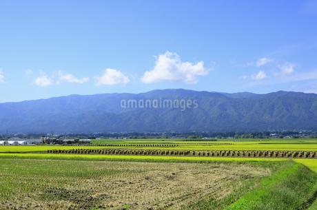 秋色の山形県白鷹町の写真素材 [FYI01259896]