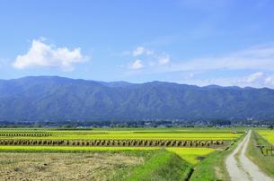 秋色の山形県白鷹町の写真素材 [FYI01259900]