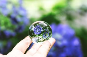 キラキラ紫陽花の写真素材 [FYI01259986]