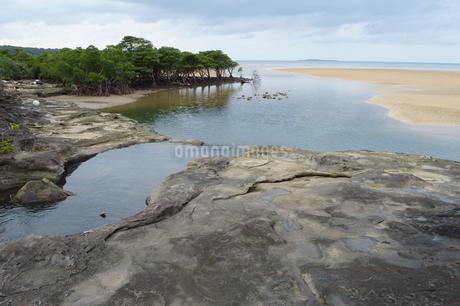 奥にマングローブが広がる風景の写真素材 [FYI01259999]